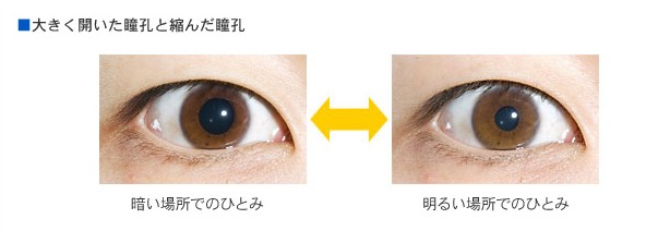 瞳孔の大きさ