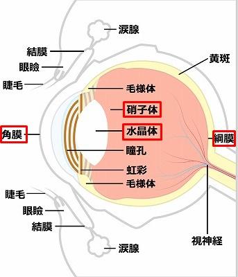 コラーゲンを含んだ目の構造図