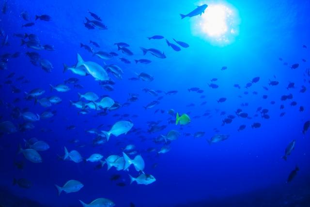 海洋性コラーゲンの原料