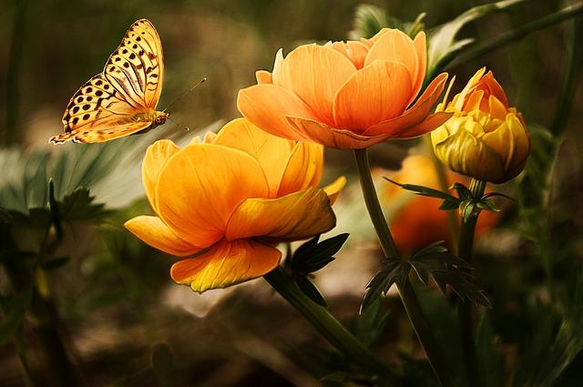 花に蝶が舞う