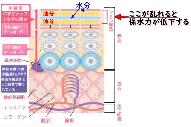 ラメラ構造図解