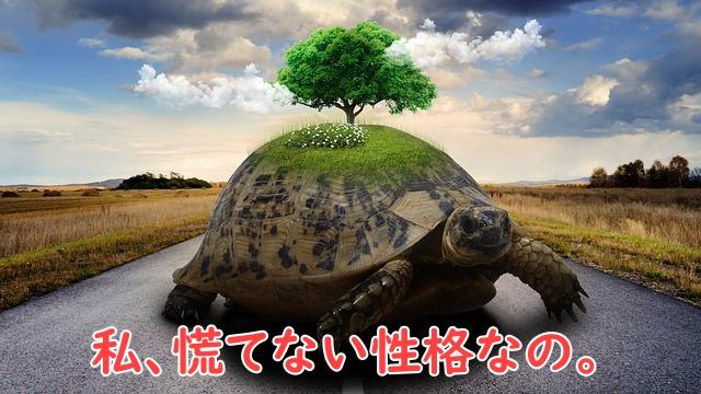 亀はゆっくり歩く